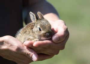 rabbit-913550_1280